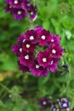3 blommor Arkivfoto