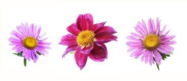 3 blommor Royaltyfri Fotografi