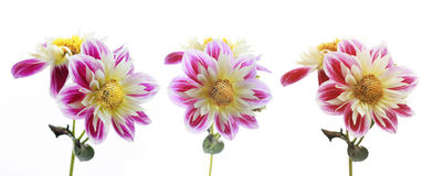 3 blommor Royaltyfria Foton