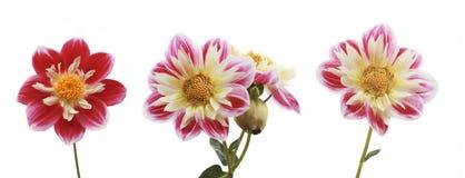 3 blommor Fotografering för Bildbyråer