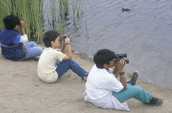 3 boys bird watching Royalty Free Stock Image