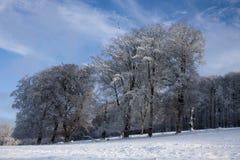 3 buków zima Zdjęcia Royalty Free