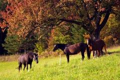3 chevaux Images libres de droits