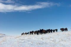 3 chevaux de troupeau Photographie stock libre de droits