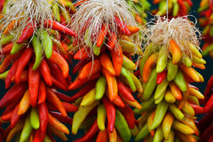 3 Chile Ristras Royalty Free Stock Images