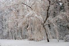 3 chill зимы Стоковое фото RF