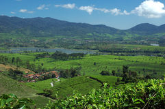 3 cileunca湖种植园茶视图 免版税库存照片