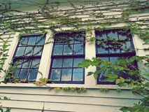 3 Closed Window Pane Slightly Covered With Green Vines at Daytime Royalty Free Stock Photography