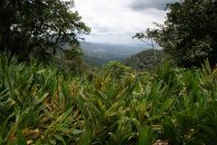 3 cloudforest tropicaux Image stock