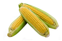3 cob corn isolated. On white background royalty free stock photography