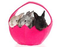 3 conejitos en cesta rosada Imagen de archivo