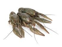 3 crayfishes Стоковые Изображения