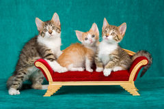 3 Cute kittens on mini sofa. 3 Cute kittens sitting on miniature victorian couch sofa, on emerald background stock photography