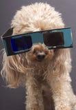 3 D-hundexponeringsglas Royaltyfria Bilder