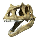 3 D rendering of an Allosaurus skull. Photorealistic 3 D rendering of an Allosaurus skull. On white background with clipping path included Royalty Free Stock Photo