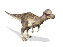 3 D rendering of a Pachycephalosaurus. Photorealistic 3 D rendering of a Pachycephalosaurus. On white background with drop shadow and clipping path included Royalty Free Stock Images