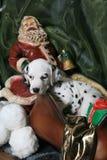 3 dalmatian szczeniaka s Santa sanie Obraz Royalty Free