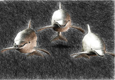 3 dolphin sketch. A sketch of 3 dolphin swimming in formation Stock Images