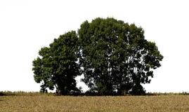 3 drzewo Fotografia Royalty Free