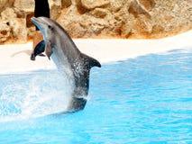 3 dsiplay delfinów Obrazy Royalty Free