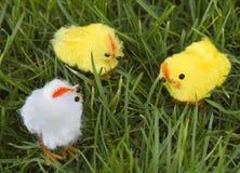 3 ducklets di pasqua Fotografie Stock Libere da Diritti