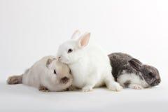 3 dzieci królik Zdjęcie Stock