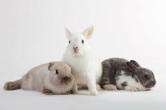 3 dzieci królik Zdjęcia Royalty Free