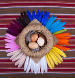 3  Eggs Basket Rainbow Feathers Royalty Free Stock Photos