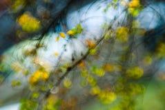 3 exponerad natur Arkivbild