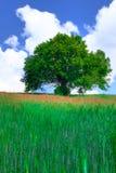 3 fält Arkivbild