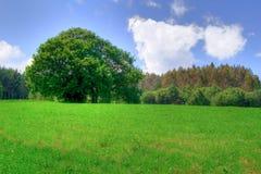 3 fält Arkivfoton