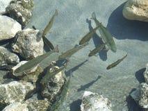 3 fiskar Fotografering för Bildbyråer