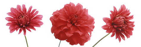 3 fleurs photographie stock