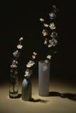 3 fleurs pour la table Photo stock