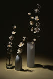 3 flores para a tabela Foto de Stock