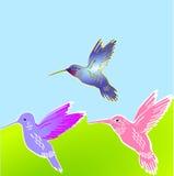 3 flower birds. Colorful hummingbird Royalty Free Stock Photography