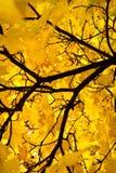 3 fogli di autunno Immagini Stock