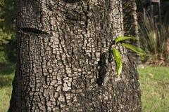 3 folhas em um largo o tronco de árvore Fotos de Stock Royalty Free