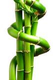 3 frais en bambou Photographie stock