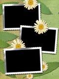 3 frame met kamille Stock Foto's