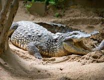3 gavial faux Photos libres de droits