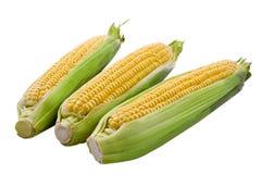 3 geïsoleerd maïskolfgraan Stock Afbeeldingen