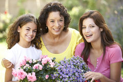 3 Generation Family Gardening Tog Royalty Free Stock Image