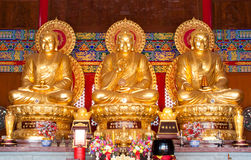 3 golden buddha Stock Photography