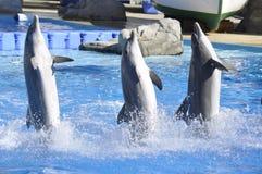 3 golfinhos dançing Foto de Stock