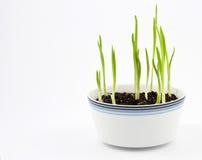 3 gräsplaner Royaltyfria Bilder