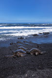 3 green sea turtle at punalu'u state park Stock Photos