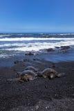 3 green sea turtle at punalu'u state park Stock Photos