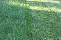 3 green trawy Zdjęcie Stock