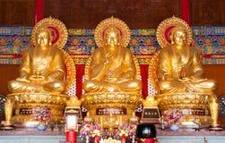 3 guld- buddha Arkivbild